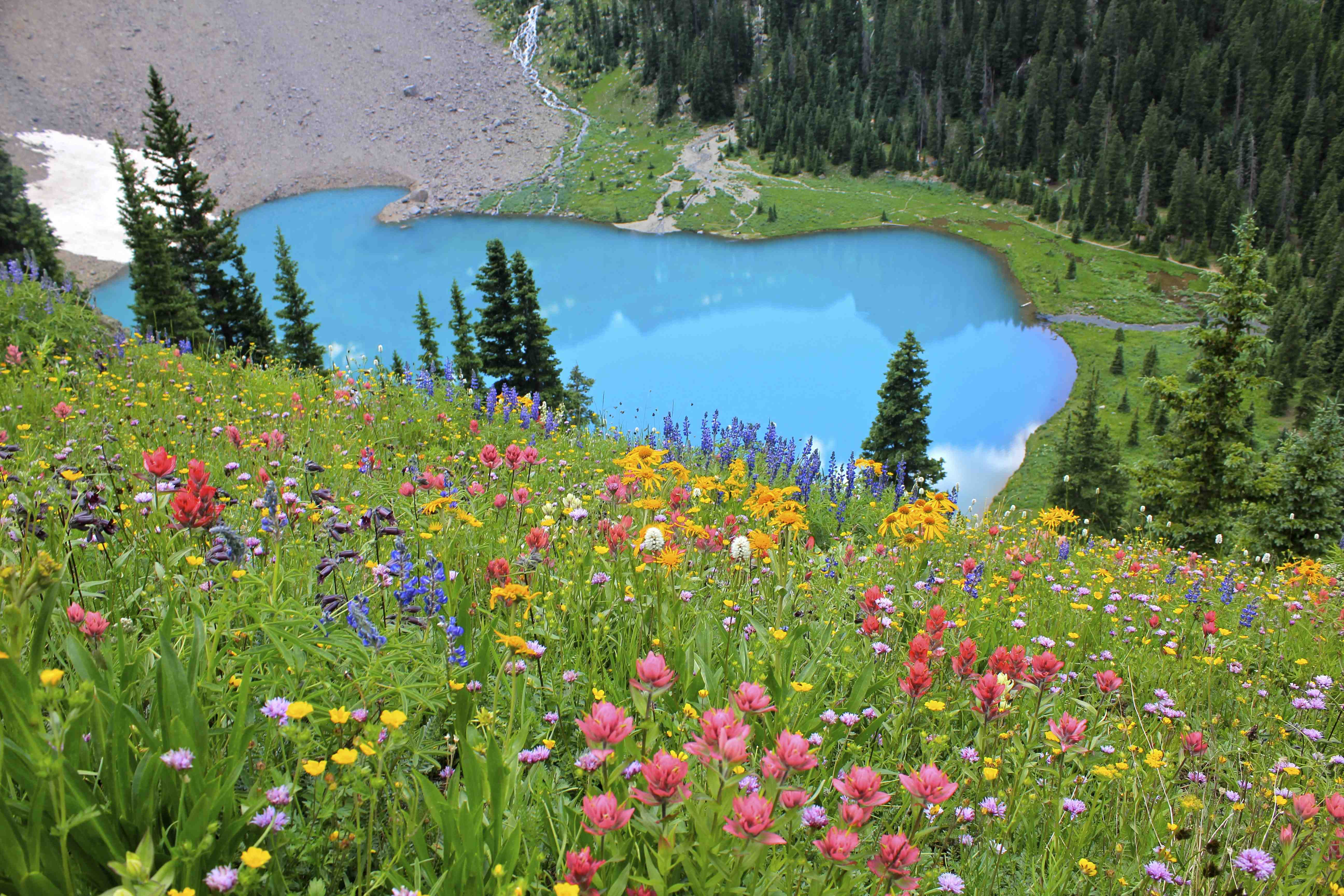 Spring hikes in ouray county chipeta solar springs resort blue lakes flowers mightylinksfo